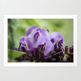 Purple Dream Wisteria Art Print