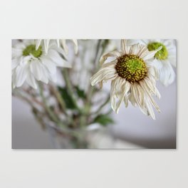 Dead things are beautiful too (3) Canvas Print