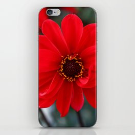 Red Red Dahlia iPhone Skin