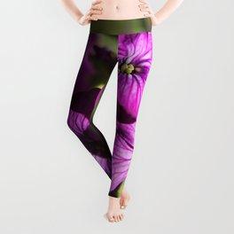 Purple Spring Flowers Photography Print Leggings