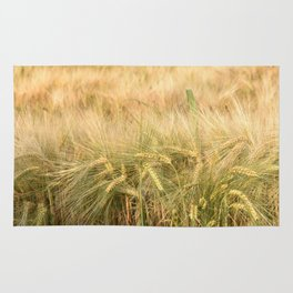 Wheat ripening in the field. Rug