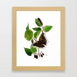 Mourning Cloak Butterfly Framed Art Print