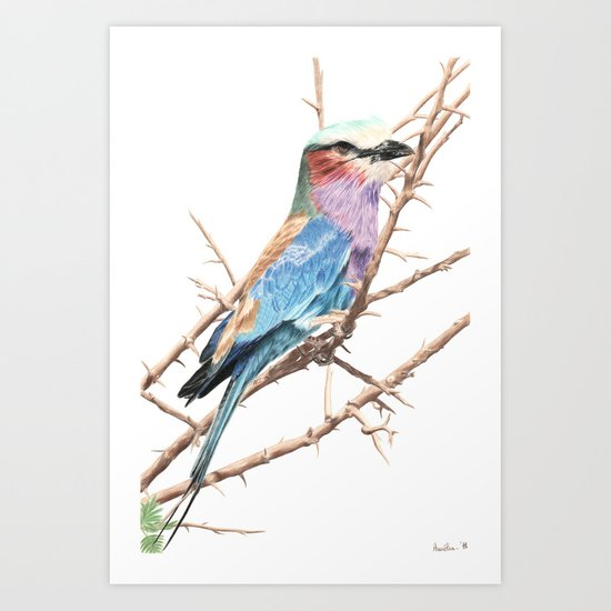 Lilac breasted roller Art Print