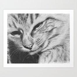 Pencil Drawing of Mr Cat Art Print