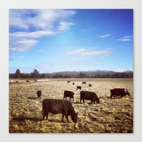 cows Canvas Prints featuring Cows by Aaron Spicer