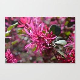 Pink Tenticles Canvas Print