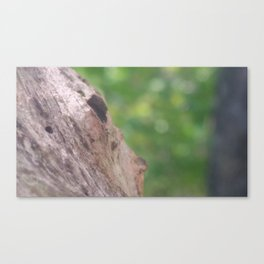 Tree photograph Canvas Print