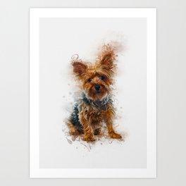 Yorkshire Terrier Art Art Print