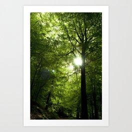 Sunshine through the trees. Art Print