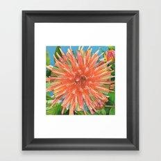 Dahlia Variabilis Framed Art Print