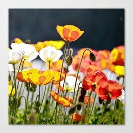 Italian Poppies Canvas Print