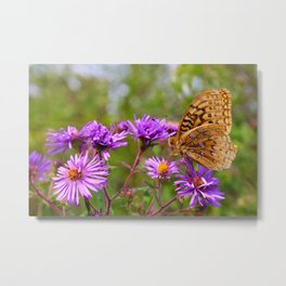 Butterfly and Asters Metal Print