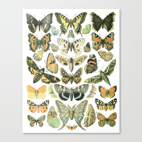 Vintage Butterfly Botanical Chart 2 Canvas Print by ...  Vintage Butterfly Chart