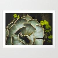 succulent Art Prints featuring Succulent by Olivia Joy StClaire