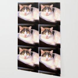 Sweet Daisy Cat Wallpaper