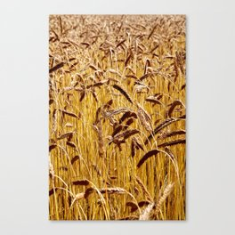 High grain image Canvas Print