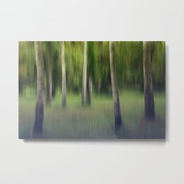 flickering birches Metal Print