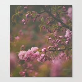 Sprung on Spring Canvas Print