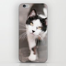 Friendly Black and White Cat iPhone & iPod Skin