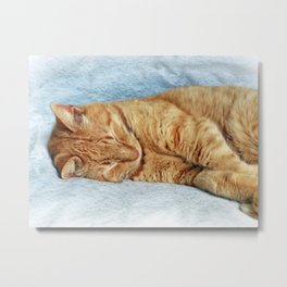 Sleepy Kitty Metal Print