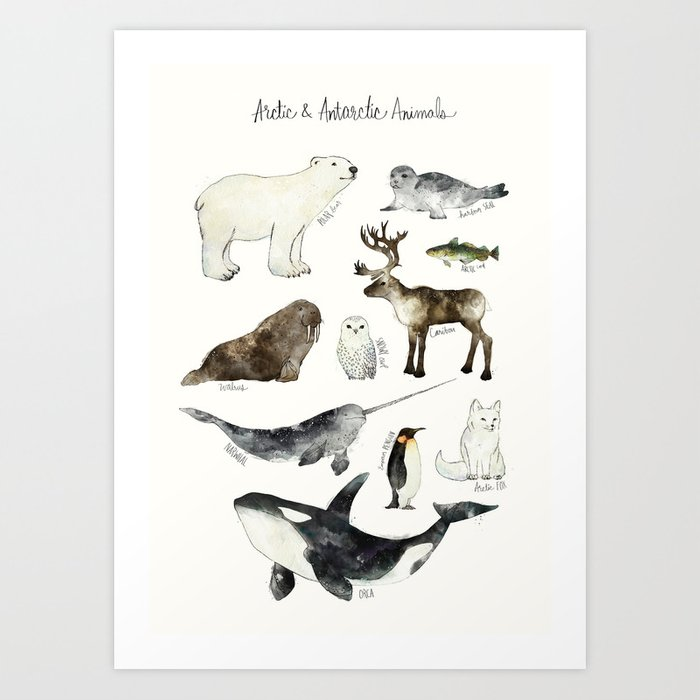 Discover the motif ARCTIC & ANTARCTIC ANIMALS by Amy Hamilton as a print at TOPPOSTER
