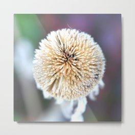 Flower | Flowers | Seed Pod Sphere | Nadia Bonello Metal Print