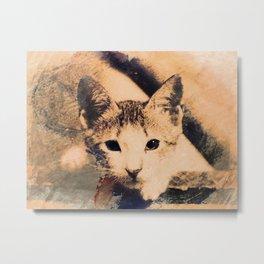 Merlin the Cat Metal Print