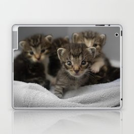 Photo of a group of cuddly kittens Laptop & iPad Skin