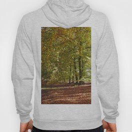 Autumnal beech trees in a natural woodland. Norfolk, UK. Hoody