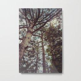 The Pinewood Metal Print