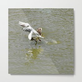 Bird Flexibility Metal Print