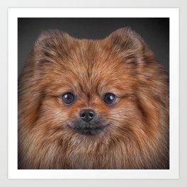 Drawing Dog Pomeranian Spitz Art Print