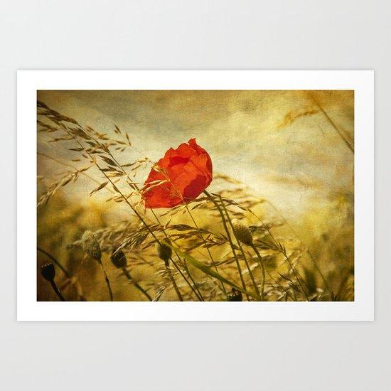 paint a poppy Art Print