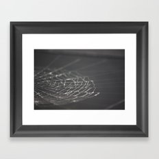 Spider Web Framed Art Print
