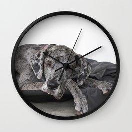 Great Dane waiting Wall Clock
