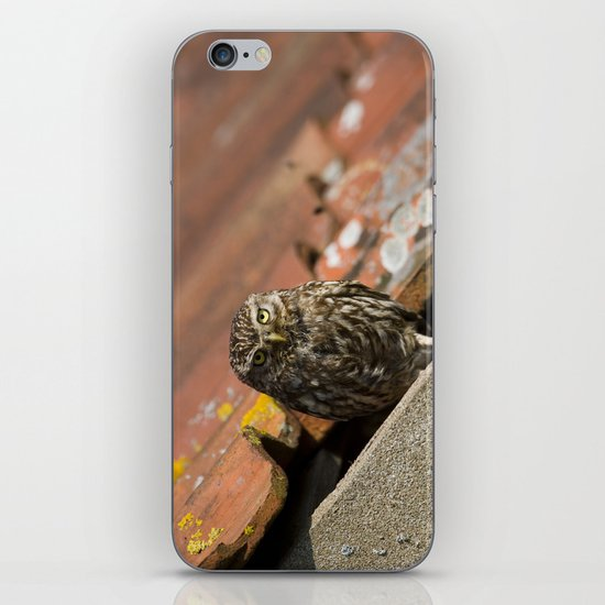 ADULT LITTLE OWL iPhone & iPod Skin
