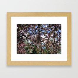 Spring Blossoms II Framed Art Print