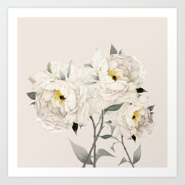 White Peonies Art Print