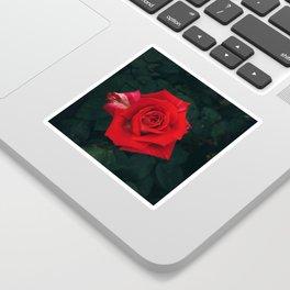 Red rose Sticker