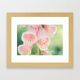 Pastel Foxgloves Framed Art Print