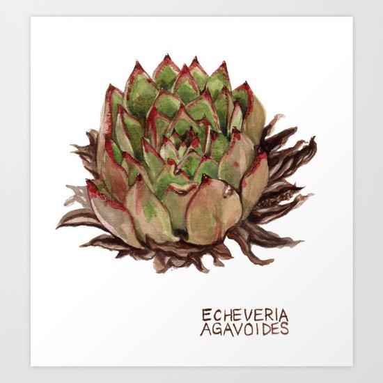 Echeveria Agavoides Art Print