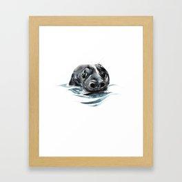 Seal Floating Framed Art Print