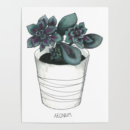 Aeonium Poster