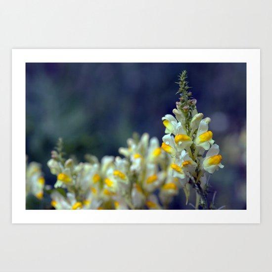 Toadflax flowers 5067 Art Print
