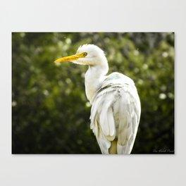 The occasional Crane Canvas Print