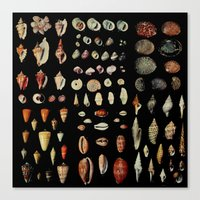 shells Canvas Prints featuring Shells by Good Sense