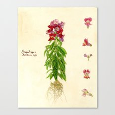 Snapdragon Canvas Print
