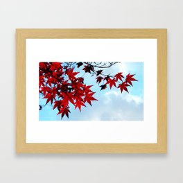Burning Red Japanese Maple and the Sky In Fall Photography Framed Art Print
