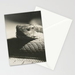Film Rattlesnake Stationery Cards