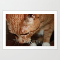 tigger Art Prints featuring Tigger from Above by Erin Stevens